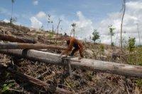 Pengrusakkan Hutan