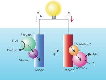 Sel bahan bakar enzimatik